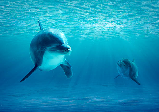 Two Dolphins Under Water Two Dolphins swimming under water looking to camera dolphin stock pictures, royalty-free photos & images