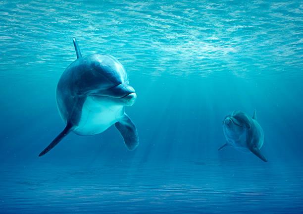 dwa delfinów w wodzie - organizm wodny zdjęcia i obrazy z banku zdjęć