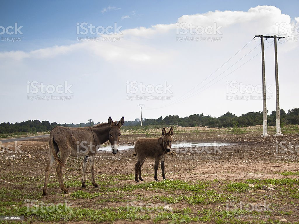 Two donkeys stand on the grass against sky royalty-free stock photo