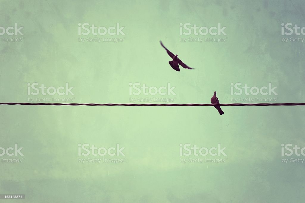 Two Doves On A Telpephone Line stock photo