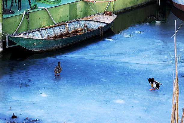 Two ducks on the frozen sea stock photo