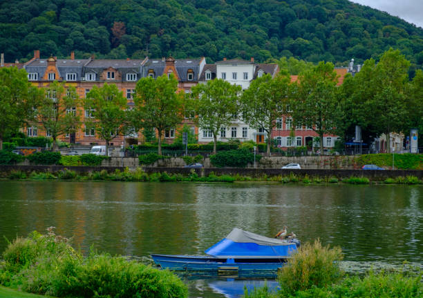 Two ducks stand on a boat on River Neckar in Heidelberg, Germany stock photo