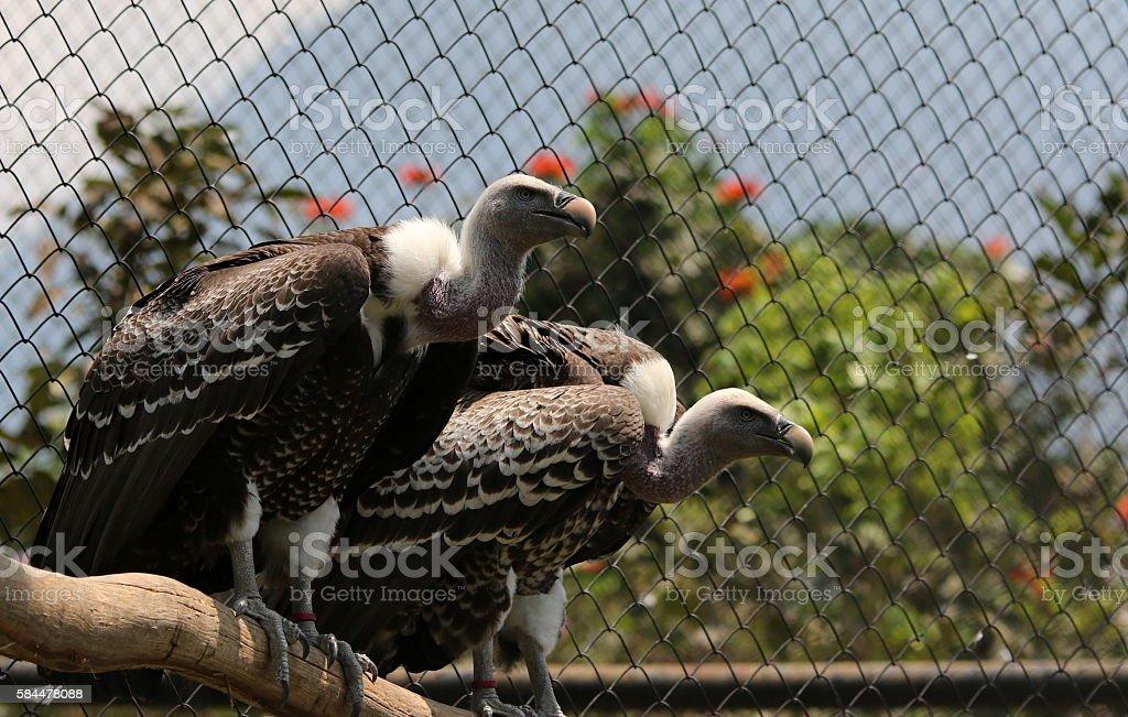 Two Eagle Bird - foto de acervo