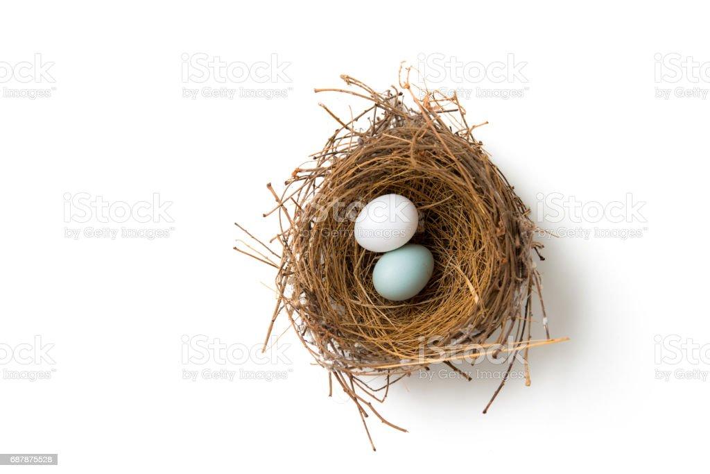 two eggs in bird nest stock photo