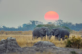Two elephants with sunset behind. There is a large orange sun behind them.
