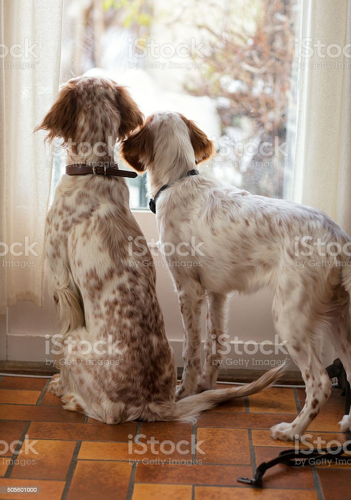 Due Inglese Anticonformisti Alle Guardando Fuori La Finestra