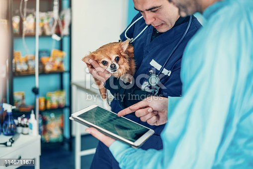 Two experienced veterinarians examining an x ray image on display of digital tablet.