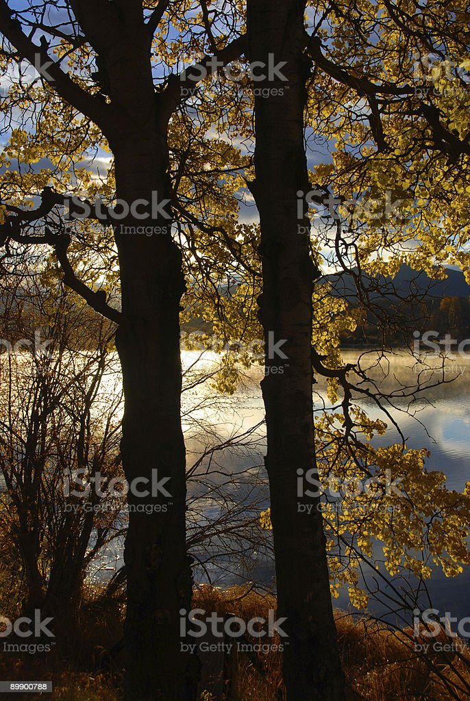 two fall trees royalty-free stock photo