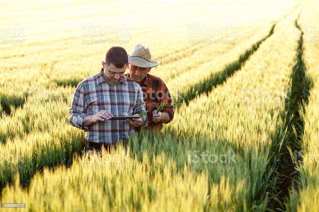 Dos agricultor parado en un campo y observando un comprimido - foto de stock
