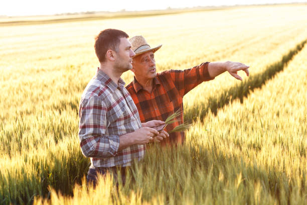 Two farmer standing in a field and looking at tablet stock photo