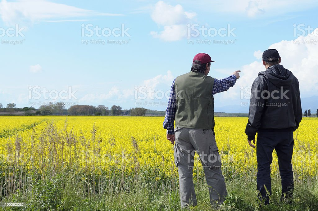 Two Farmers Pointing Canola Field stock photo
