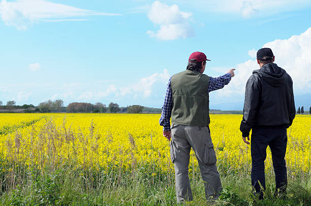 Two Farmers Pointing Canola Field  rancher stock pictures, royalty-free photos & images