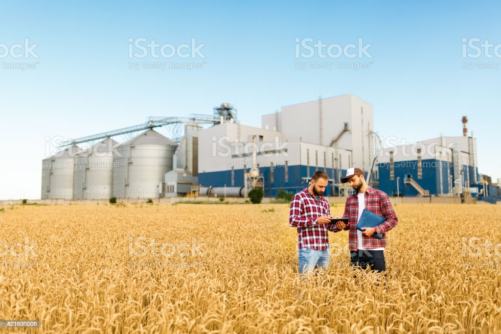 Two farmers stand in a wheat field with tablet. Agronomists discuss harvest and crops among ears of wheat with grain terminal elevator on background - foto stock