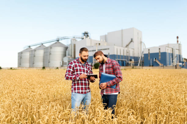 Two farmers stand in a wheat field with tablet. Agronomists discuss harvest and crops among ears of wheat with grain terminal elevator on background Two farmers are standing in a wheat field with tablet. Agronomists discuss harvest among ears of wheat with grain terminal on background agricultural cooperative stock pictures, royalty-free photos & images