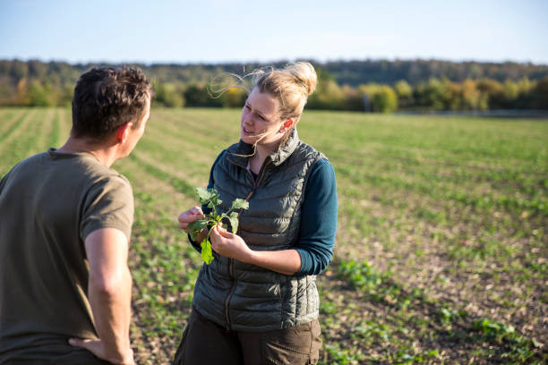 two farmers taking a look at the rapeseed seedlings in front of an agricultural field stock photo