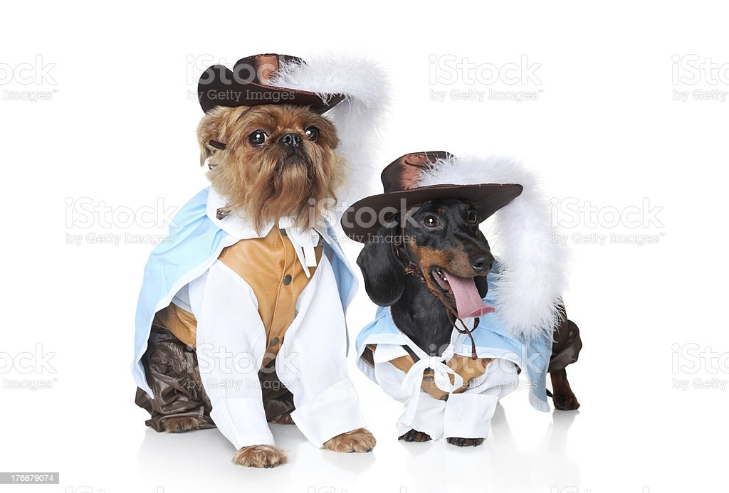 Two fashionable dog royalty-free stock photo
