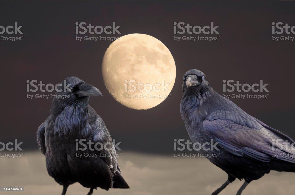 Twee dikke kraaien op de top van een klif met volledig bloed maan op de achtergrond foto