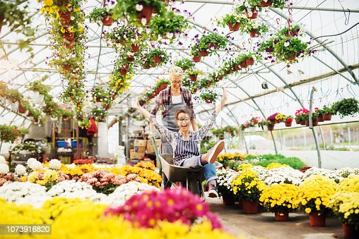 istock Two female florists having fun in greenhouse. One woman pushing other in wheelbarrow. All around potted flowers. 1073916820