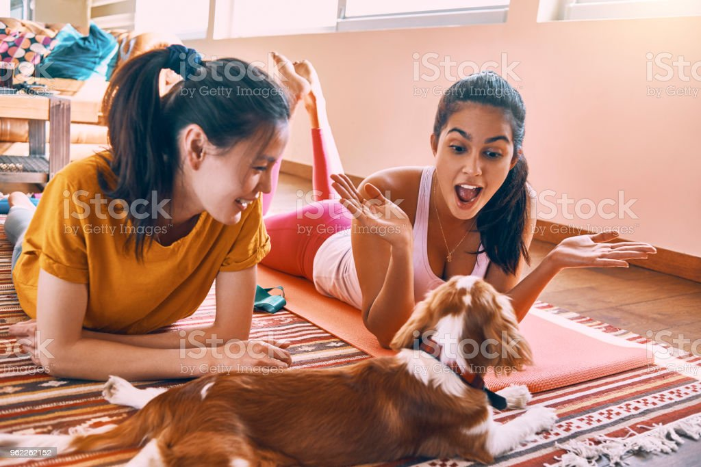 two female friends having fun after workout at home in the company of the dog stock photo