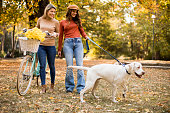 Two female friends walking in the yellow autumn park with dog and bicycle
