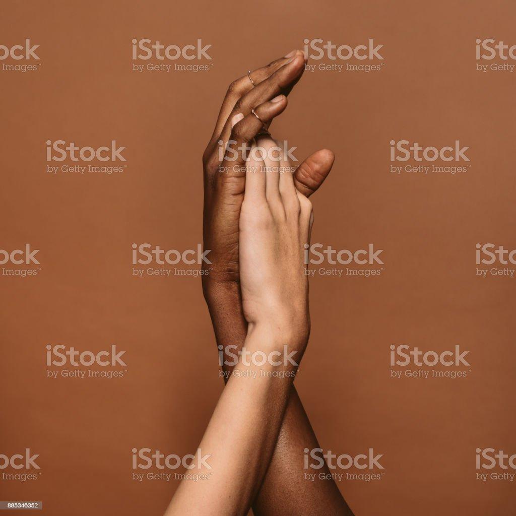 Deux mains féminines - Photo