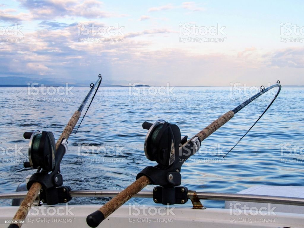 Two Fishing Rods Held In Fishing Rod Holders Attached To A Back Of A Boat The Rods Are Bent From The Weight Of The Down Riggers People Are Trolling For Salmon Of
