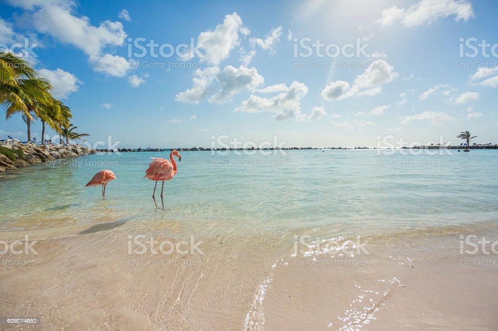 Dwa Flamingi na plaży – zdjęcie
