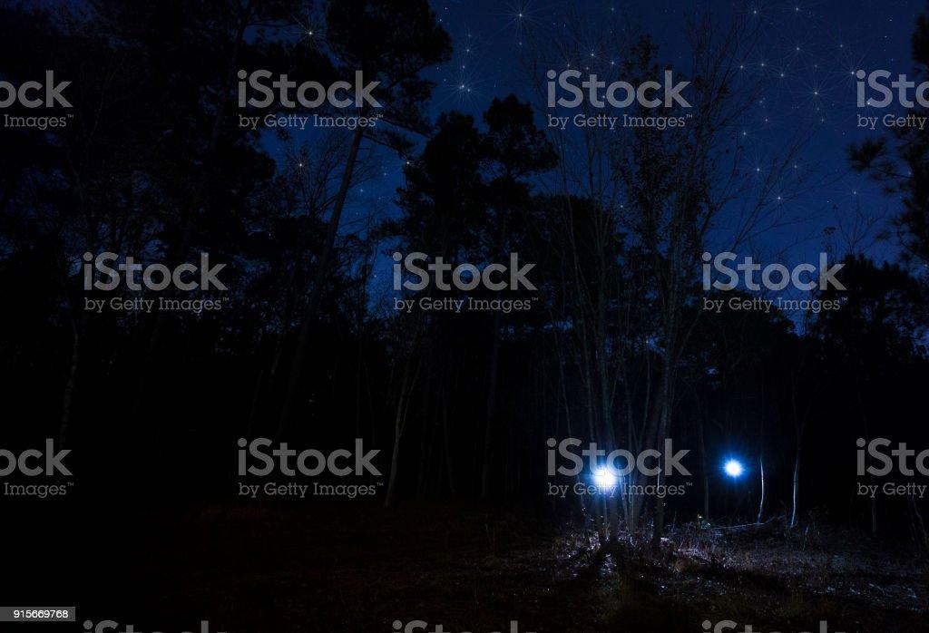 Zwei Taschenlampen in der Nacht im Wald – Foto