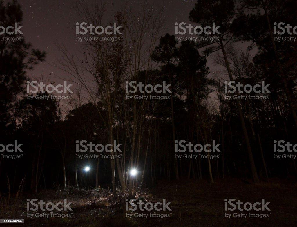 Zwei Taschenlampen kommt aus dem Wald – Foto