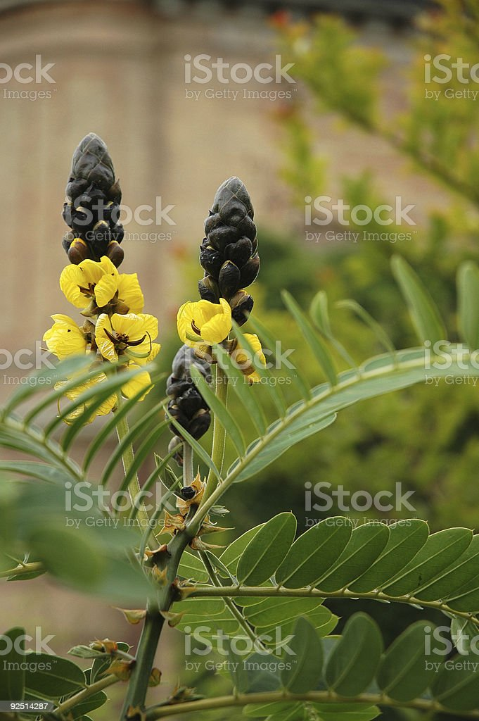Two Flowers in Garden royalty-free stock photo