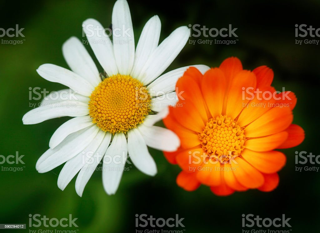 two flowers royaltyfri bildbanksbilder