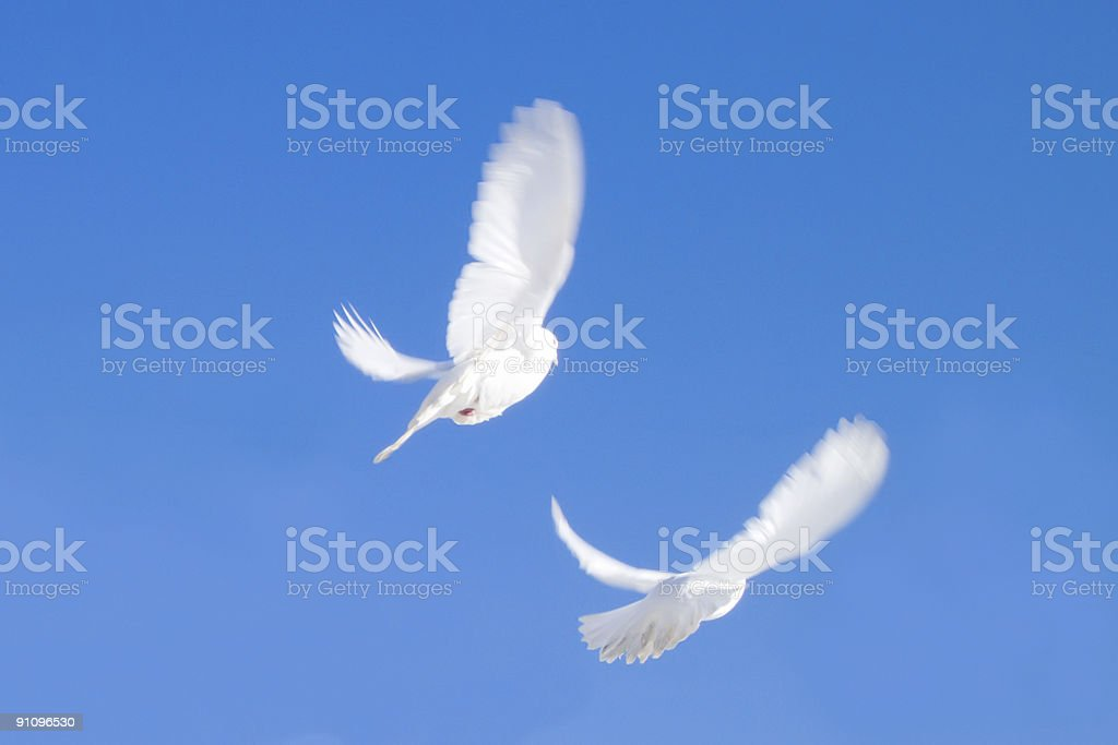 Two flying doves royalty-free stock photo