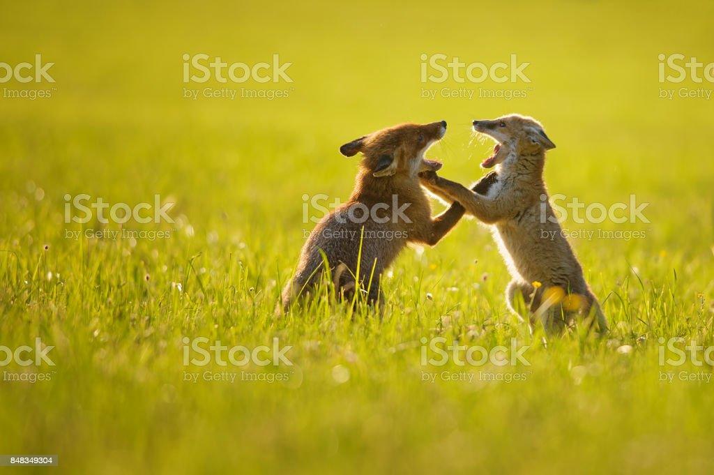 Zwei Jungen spielen im Sommer Sonnenuntergang Fuchs – Foto