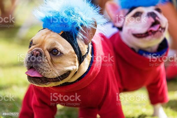 Two french bulldogs dressed up for halloween picture id494425272?b=1&k=6&m=494425272&s=612x612&h=hesj dpmprajuiowyerco4eg0z8btihr5qk x5ml3aw=