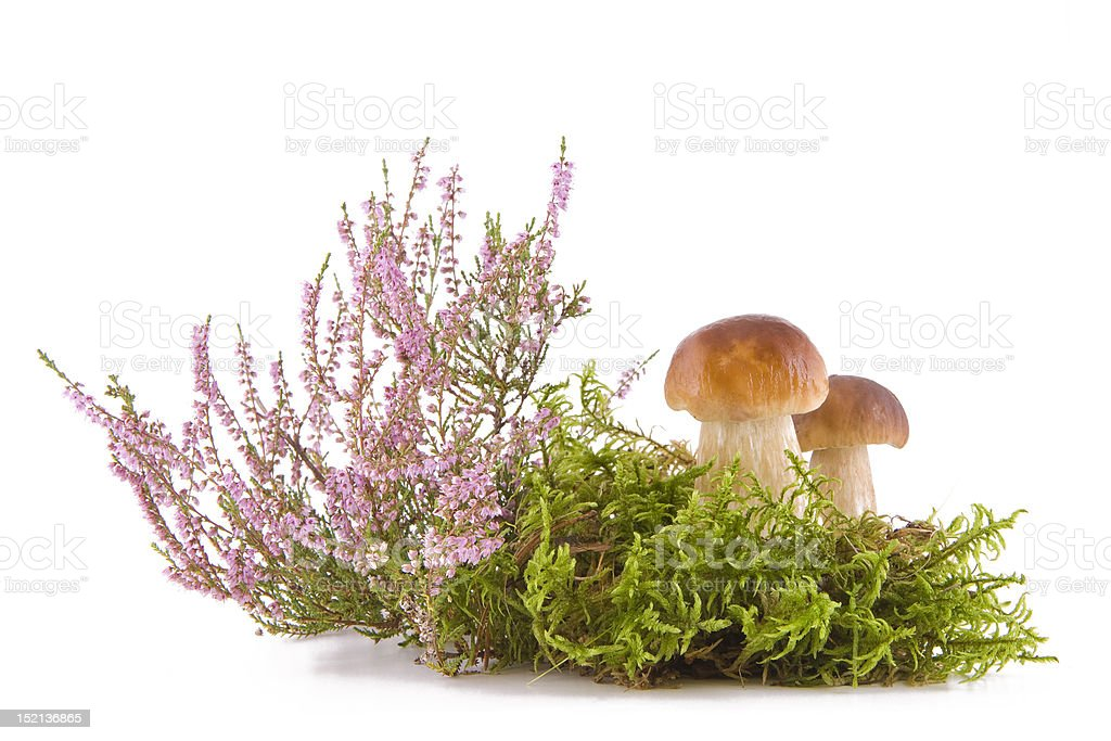 Two fresh mushrooms royalty-free stock photo