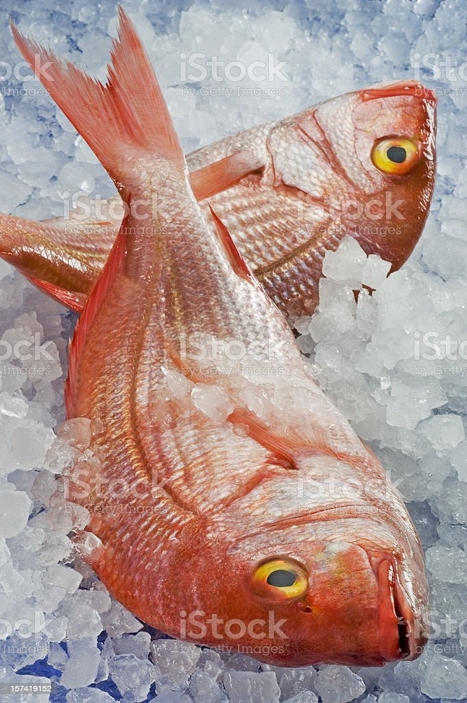Two fresh pagellus erythrinus on ice royalty-free stock photo