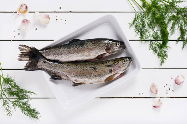 two fresh rainbow trout on a white plate. - trout foto e immagini stock