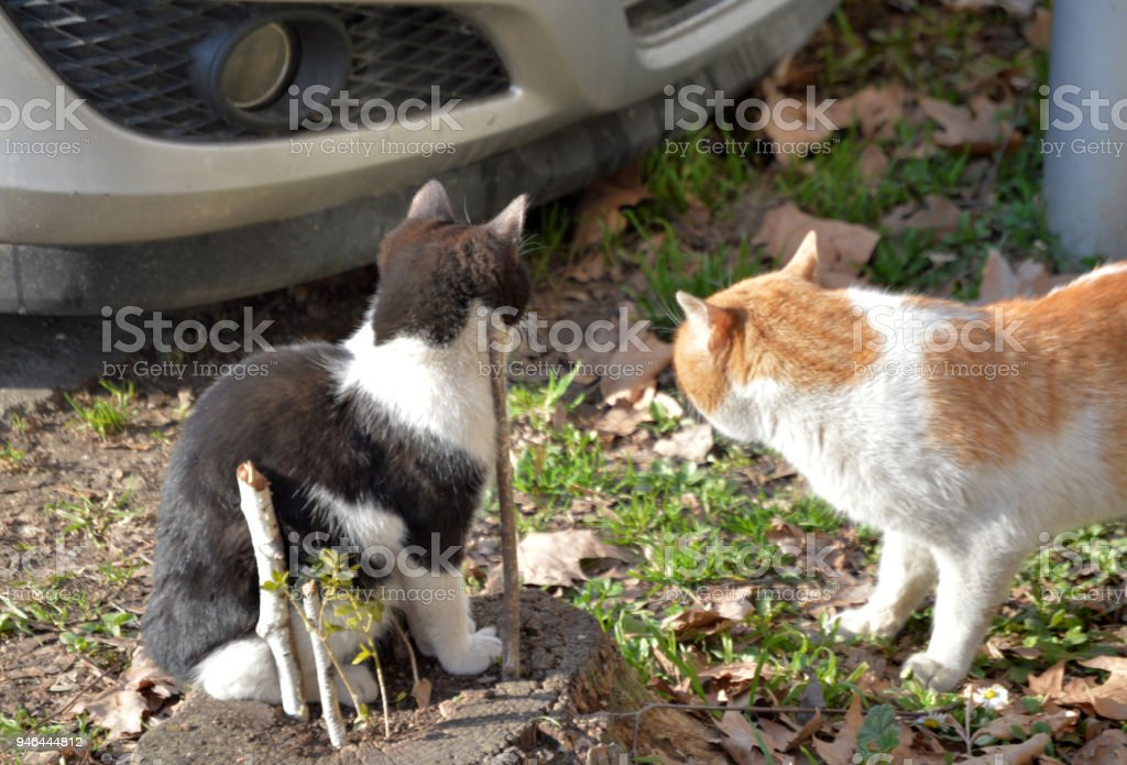Two friendly cats hanging out together stock photo