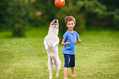 Boy looking at a dog jumping to catch a ball