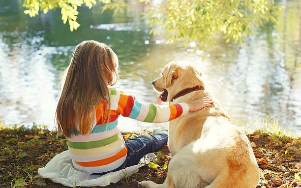Two friends, child with Labrador retriever dog sitting in sunny stock photo