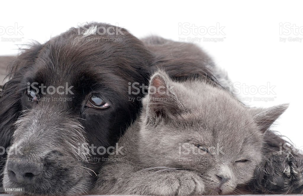 two friends, royalty-free stock photo