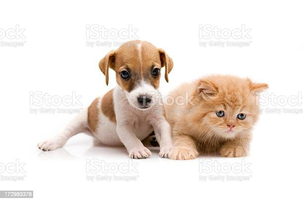 Two friends picture id172983378?b=1&k=6&m=172983378&s=612x612&h=virntu4jhcvjcnifnmsfqsonalb ug rp1clwl8em k=