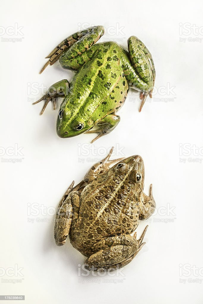 Two Frogs Chat stock photo