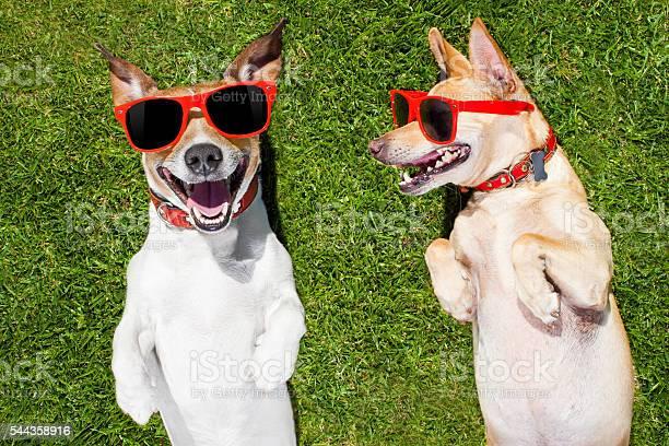 Two funny dogs picture id544358916?b=1&k=6&m=544358916&s=612x612&h=aydzpveayn1mr1ezcvegekuyuca5yzovtlnuzr1oheq=
