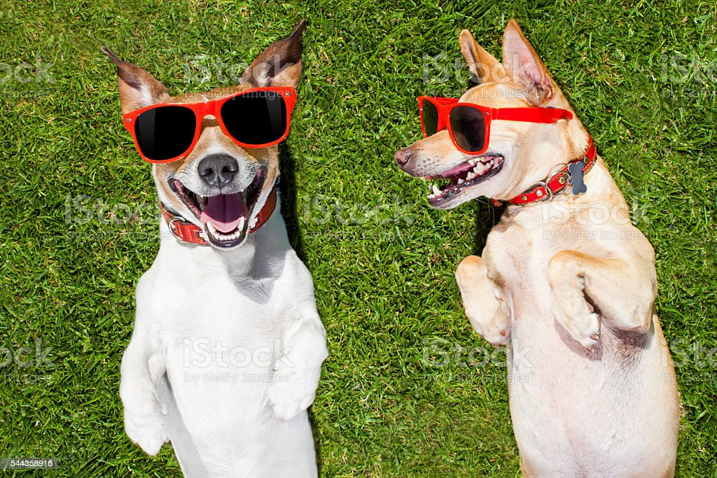 two funny dogs stock photo