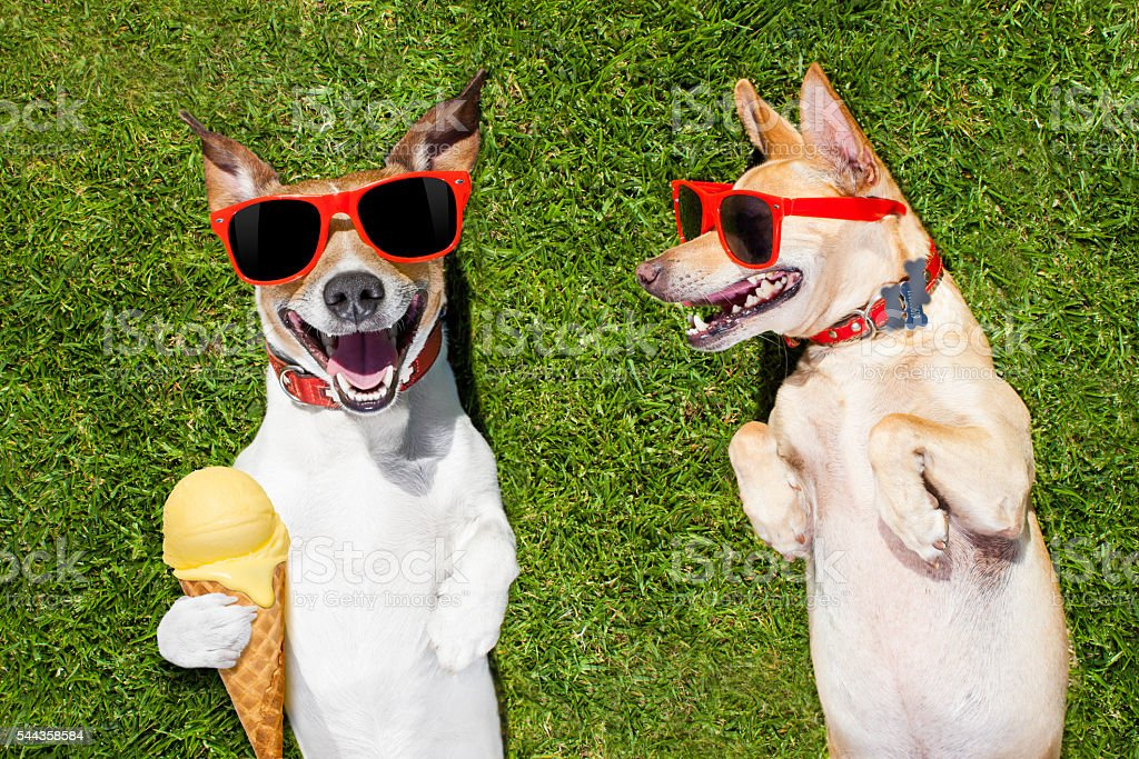 two funny dogs with ice cream - Photo