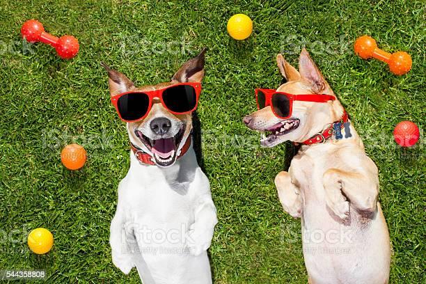 Two funny playing dogs picture id544358808?b=1&k=6&m=544358808&s=612x612&h= hu3vpkdan08riu8z dgia m5y3 xha7xfsq1sokwuo=