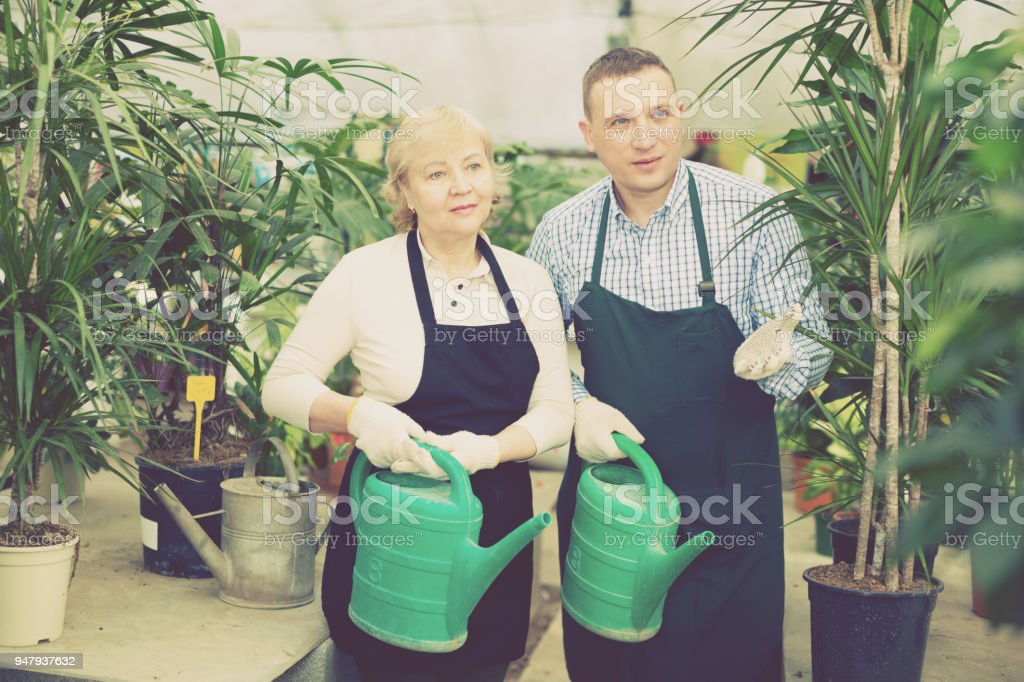 Two gardener are taking care of flowers and watered it stock photo
