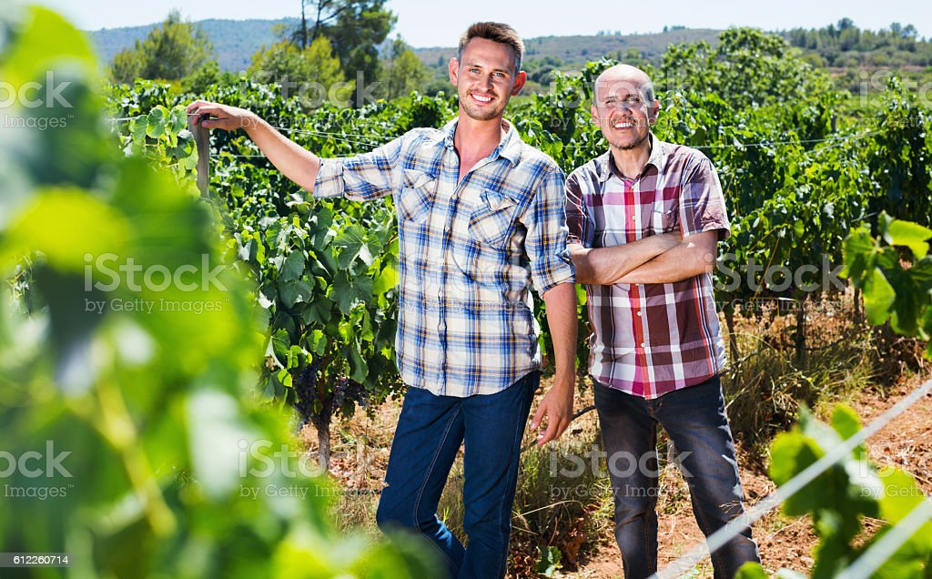 Two  gardeners standing together in grapes tree yard stock photo