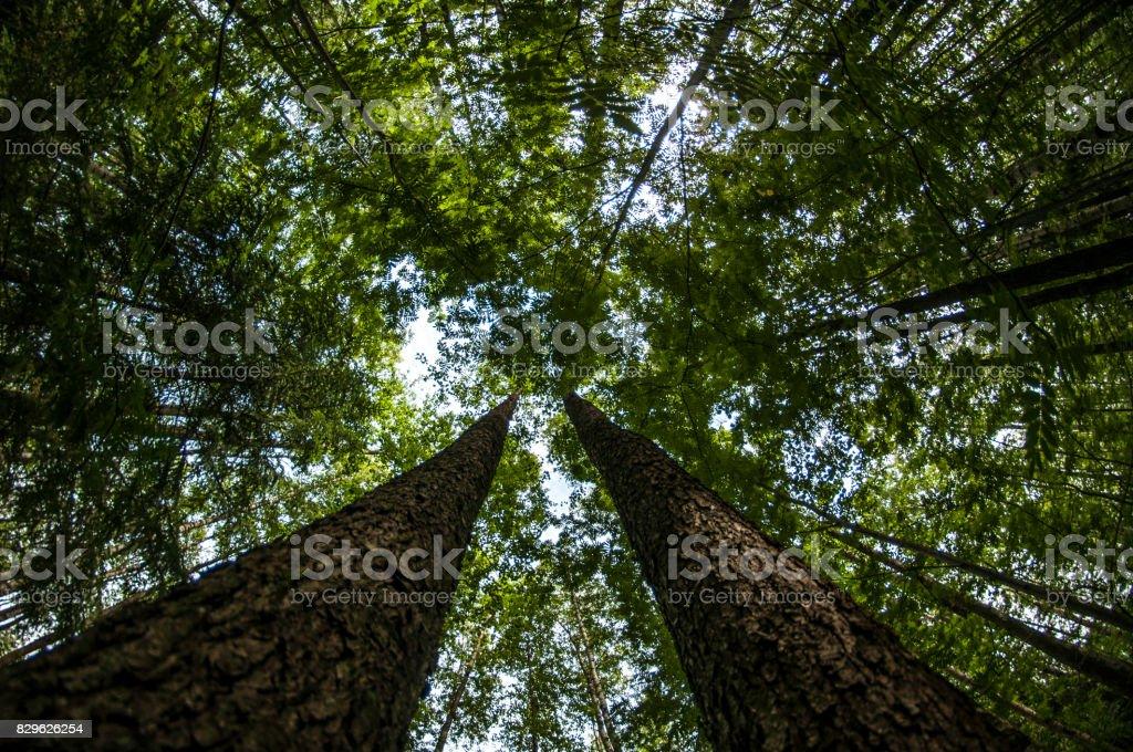 Two giants stock photo